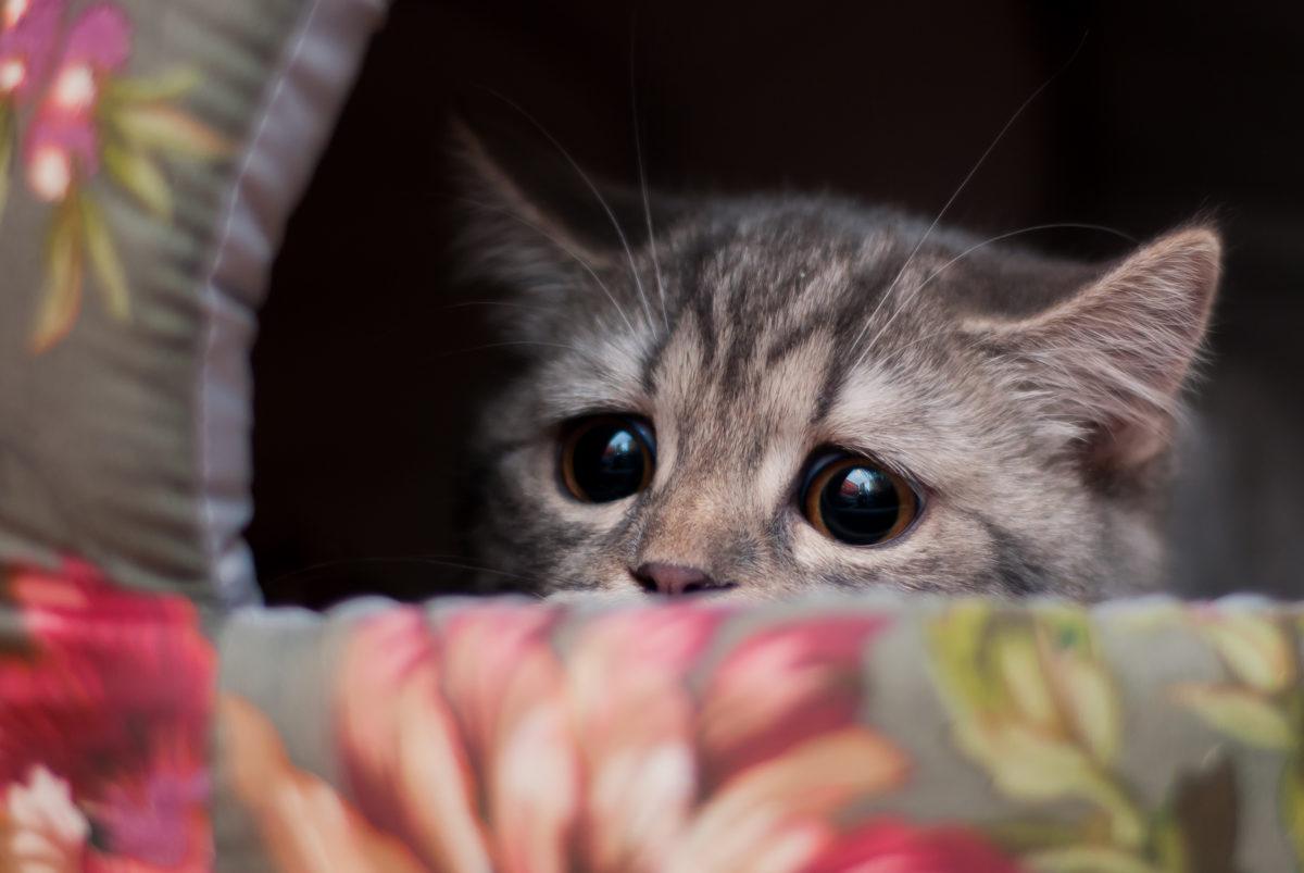 #кошкатайя